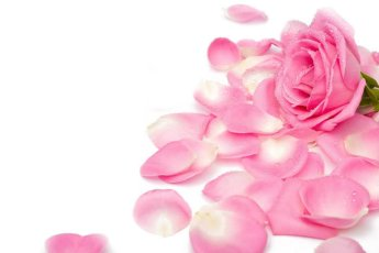 rosa7